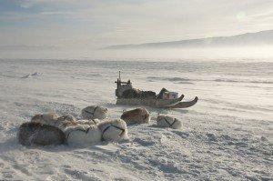 Groenland-côte est-communauté Inuit d'Ittoqqortoormiit- chiens sous la neige.